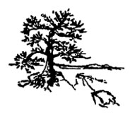 Northern Georgian Bay Association